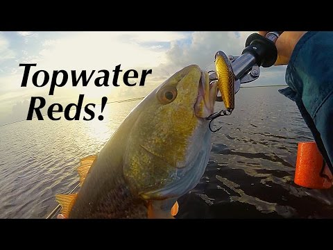 Topwater Redfish!