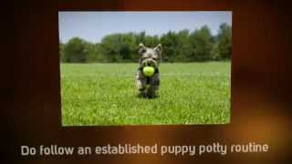 Puppy Potty Training Tips | Tips Potty Training Puppy Tips | Golden Retriever Puppy Training Tips