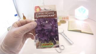 Базилик овощной Ереванский. Аэлита