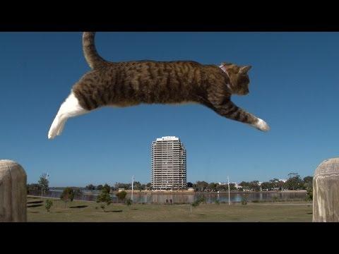 PURRKOUR - Didga the parkour Cat