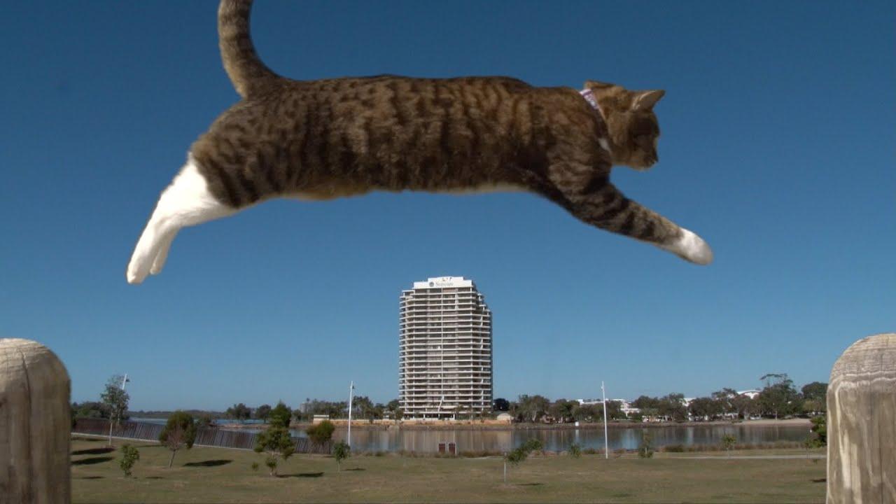Katzen Parkour