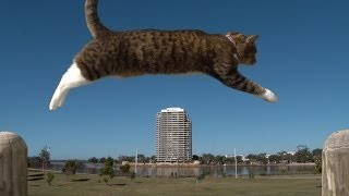 PURRKOUR - Didga the parkour Cat