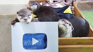 Otter family unboxes the silver button!