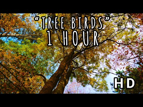 TREE BIRDS I Soothing Birdsongs in a Beautiful German Forest I 1 HOUR 2017 (HD)