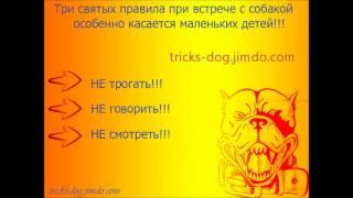 3 урок в психологии собак __3 lesson in dog psychology(Это 3-ий урок в психологии собак. В данном видео мы разбирём, как поступить при встрече с незнакомой собакой,..., 2013-09-17T19:14:38.000Z)