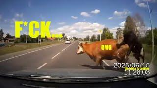 Сбил корову