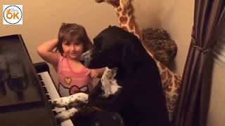 The dog plays the piano and sing - Funny Animals - Funny CATS AND DOGS