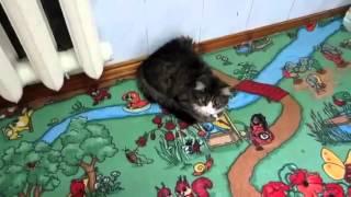 Смешная кошка мяукает по смешному это надо видеть! 133