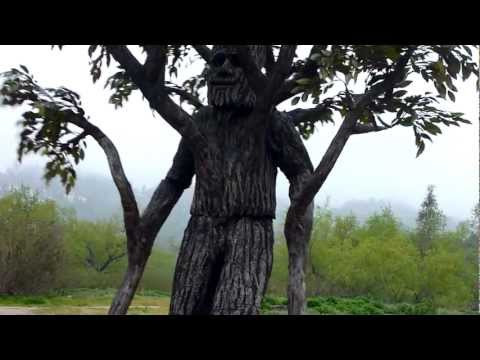 Mr. Tree, Hahamongna Walkabout 2012