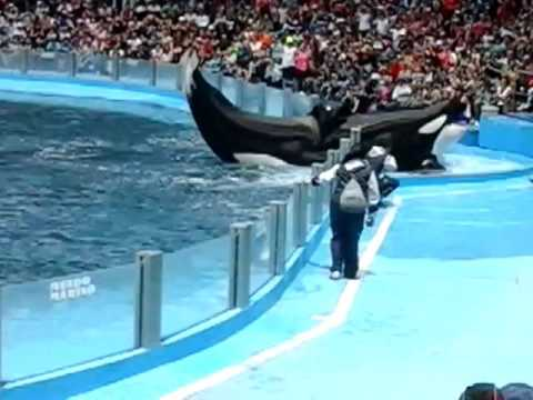 la ballena se escapa