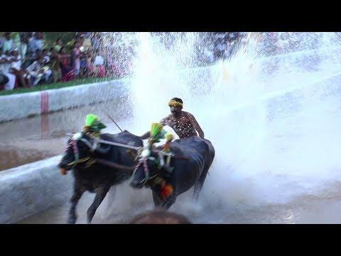 KAMBALA  The Great Sport of Coastal Karnataka, Please Share.