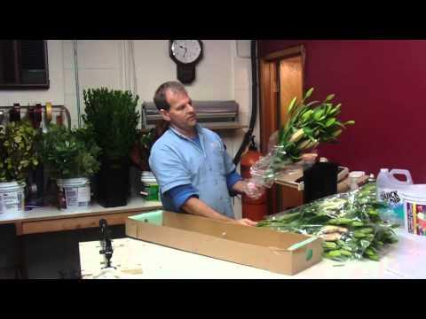How To Prepare Lily Oriental Corvara from Costa Rica - lwflowers.com
