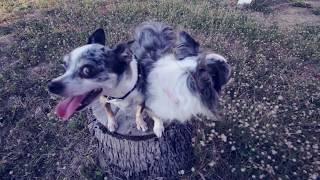 Ожирение у собак: 5 причин набора веса | Часть 3 | Догмама