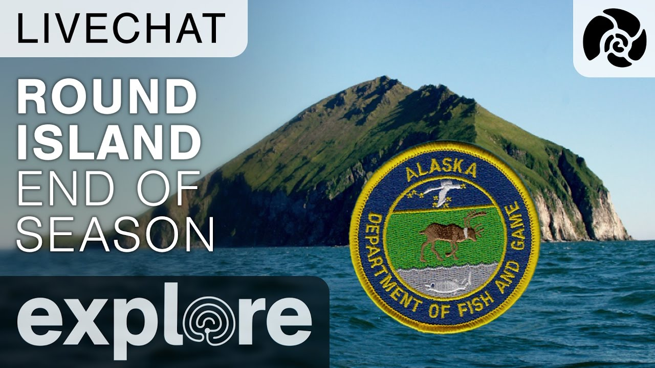 Round Island Walrus End Of Season - Live Chat