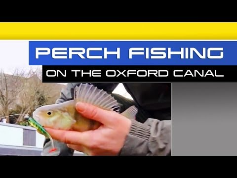 Perch Fishing On The Oxford Canal