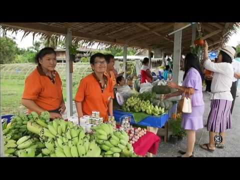 ย้อนหลัง ทุ่งแสงตะวัน   ตอน สวนผักบ้านเรา   03-12-59   TV3 Official