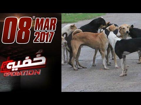 Awara Kutte | Khufia Operation | Samaa TV | 08 March 2017