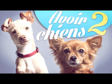 Avoir 2 chiens - Natoo