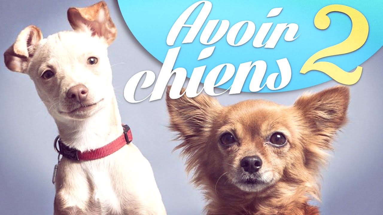 Avoir 2 chiens - Natoo - YouTube