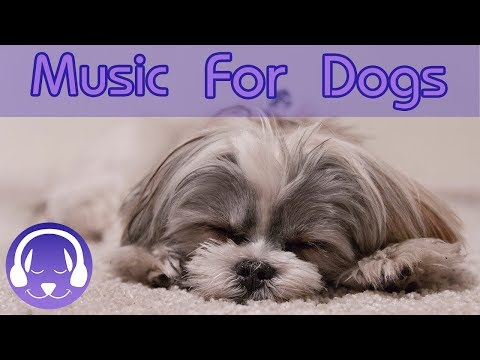 THE BEST Music Therapy for Dogs! Calm Your Anxious, Hyperactive Dog with this Natural Music Remedy!
