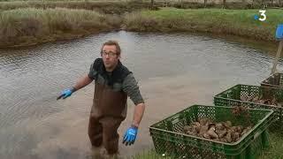 Naufrage du Grande America : les ostréiculteurs du bassin de Marennes-Oléron anticipent la pollution