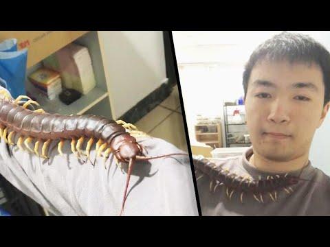 Kevin & Liz - OMG - It's a giant centipede!
