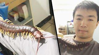 Man Lets Giant, Venomous Pet Centipede ...