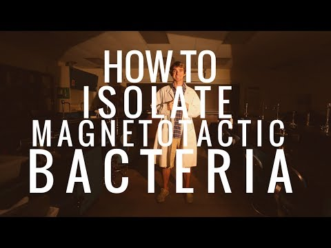 How to Isolate Magnetotactic Bacteria