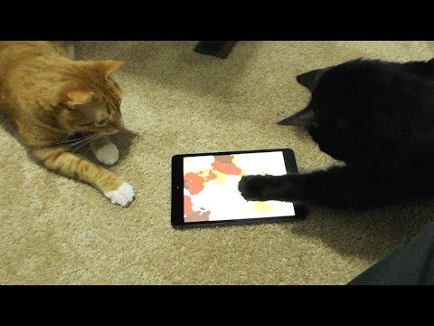 2 Cats, 1 iPad Paw Painting!