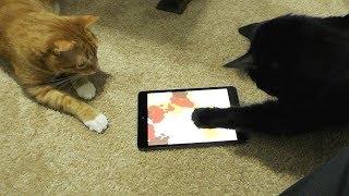 2 Cats, 1 iPad Paw Painting!