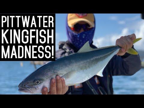Kingfish MADNESS Sydney Pittwater Fishing 시드니 낚시