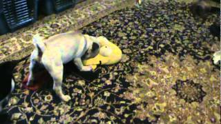 Pug Vs Homer Slipper