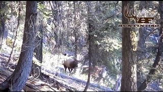Member Video Contest Winner: Sam Fraki, Washington Elk