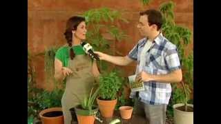 MATÉRIAS ARTE BRASIL - HORTA CASEIRA DE TEMPEROS (10/02/2012)