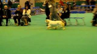 Winners of Clumber Spaniel Best of Breed at Crufts 2009.