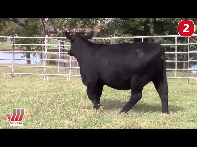 Waggoner Cattle Co. Lot 2