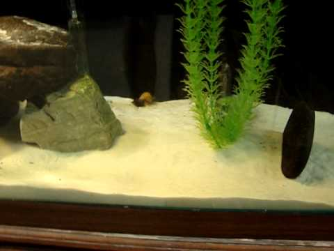 90 gallon fresh water aquarium, freshwater turtle, cichlids, discus ...