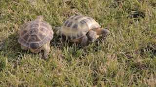 Все О Домашних Животных: Молниеносные Черепахи