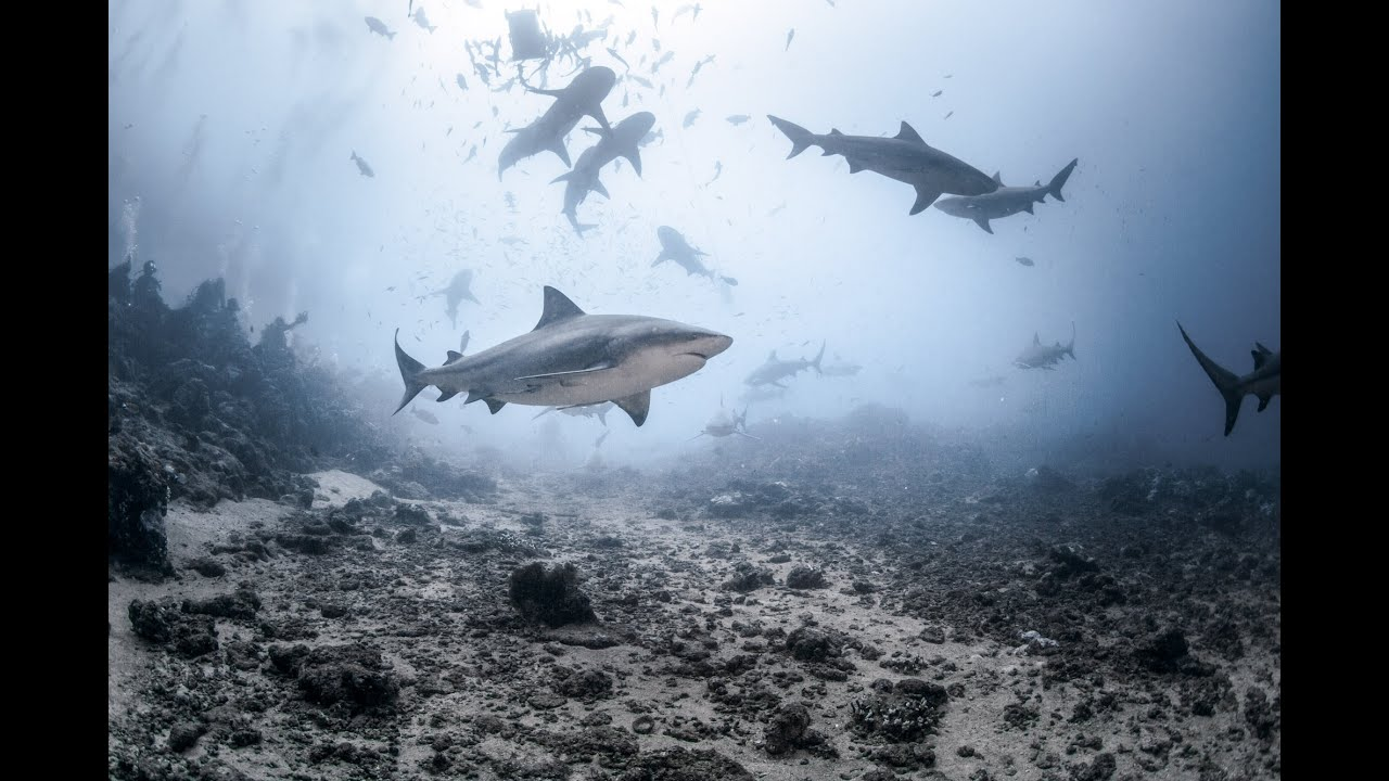 Waitt Foundation Fiji Sharks Expedition