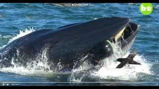 Новости .Приколы.Фотограф чудом выжил после попадания в пасть кита !