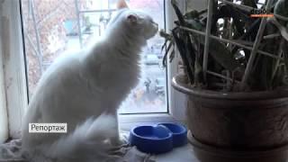 97 котов, 7 собак и черепаха / Приют для бездомных животных в киевской квартире