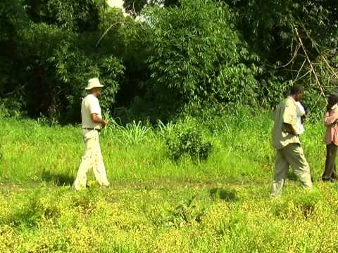Making money from DRC's forests