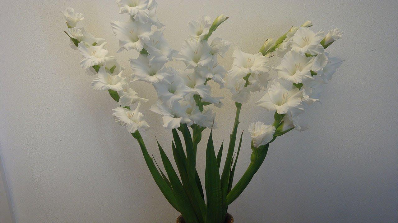 Blumendeko Gladiolen in der Vase Deko Ideen mit FloraShop