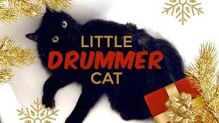 Little Drummer Cat
