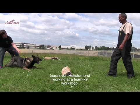 Protection Dog Training German Shepherd - TEAM-K9 south trinidad k-9 club South Trinidad K-9 Club 2020 Workshop 0