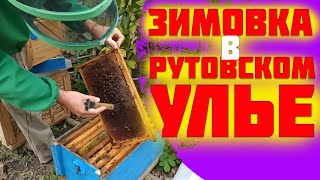 Как собрать гнездо пчел в зиму в ульях рута. Зимовка в рутовском улье