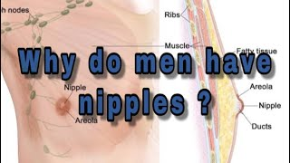 Why do men have nipples ?#men#nipples #logic #why do men have nipples ?#round #question #answer