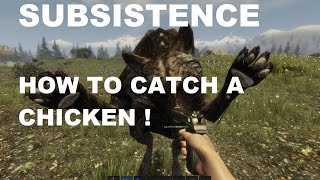Susbsistence How to catch a chicken