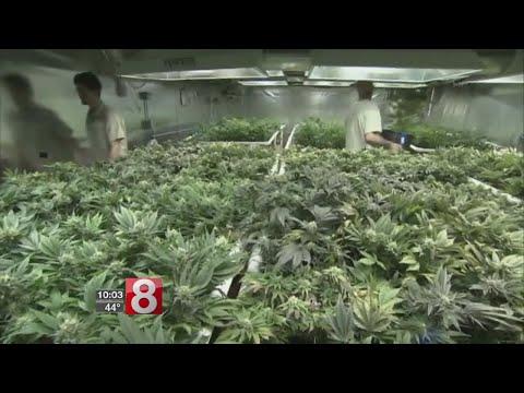 Medical marijuana shortage could force people into black market