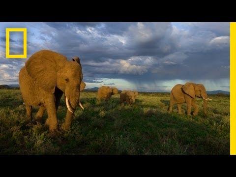 Joyce Poole: The Elephant Network   Nat Geo Live